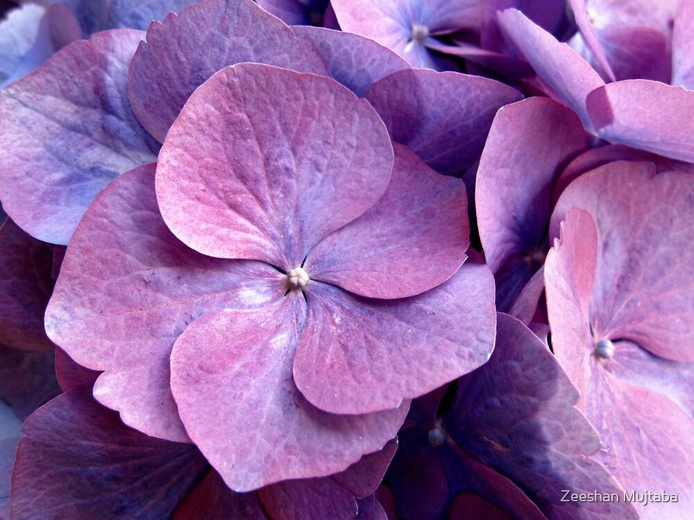 Purple flower by Zeeshan Mujtaba