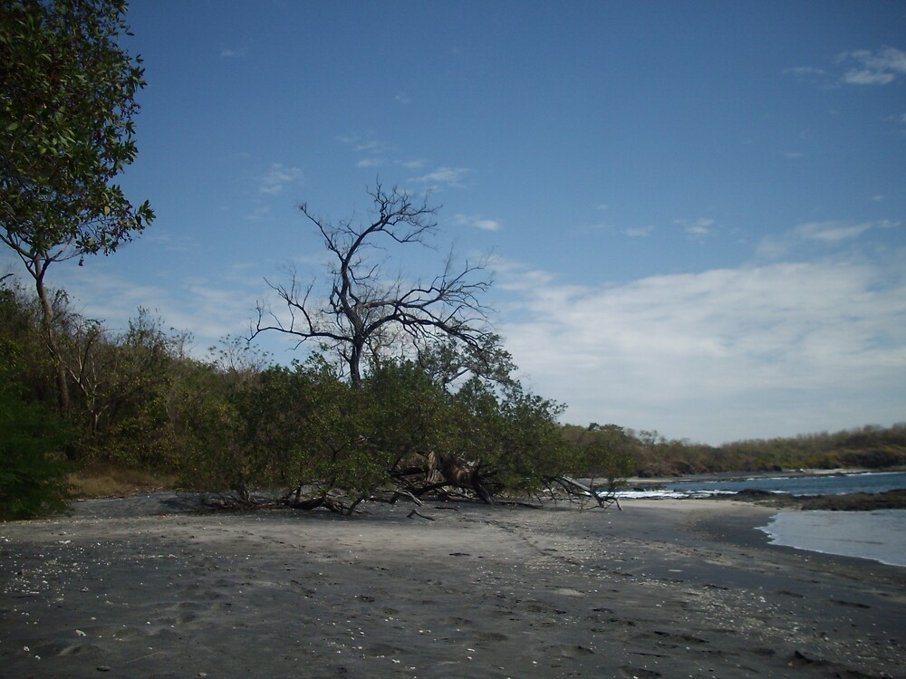 Tree at Playa Carbon by clairet