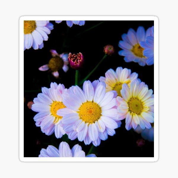 chamomile flower Sticker