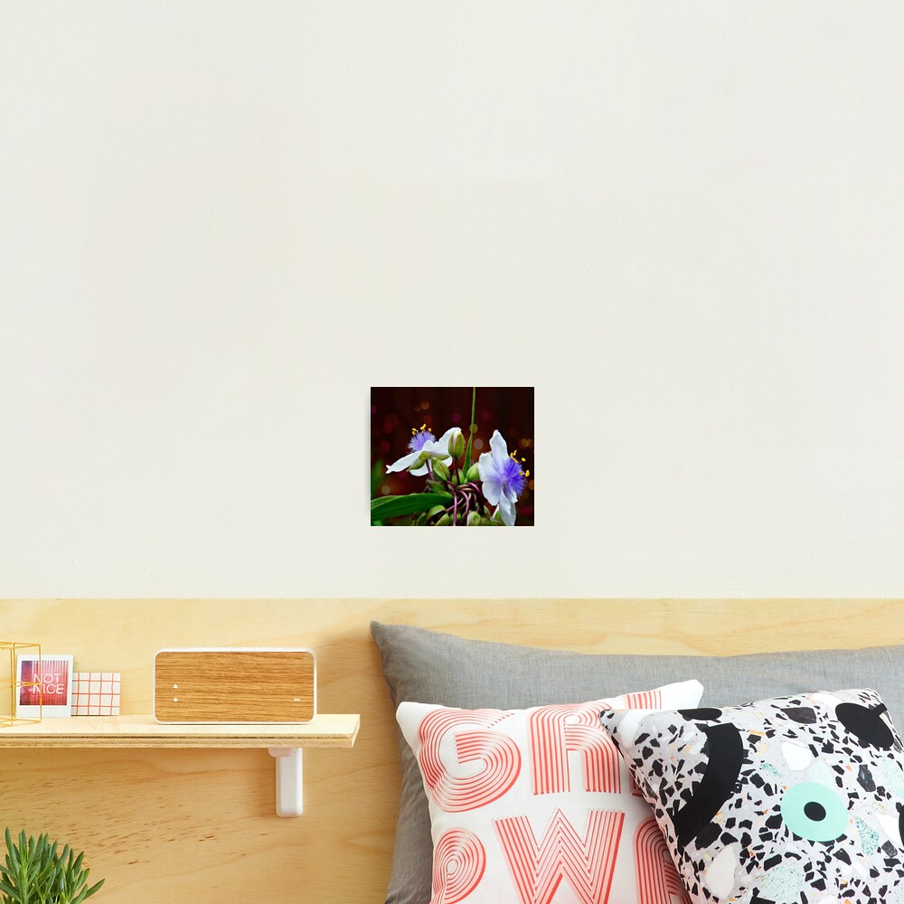 Tradescantia (Andersoniana Group) Landscape Photographic Print