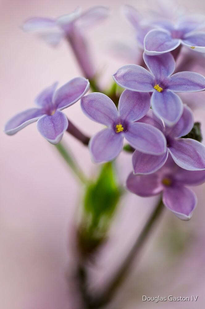 Macro Lilacs In Stu 2 by Douglas Gaston IV
