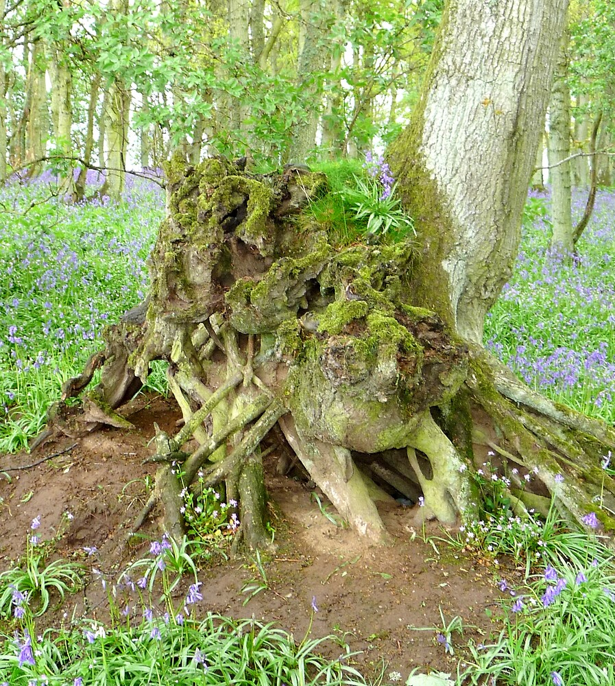 Rooted to the Spot by Braedene