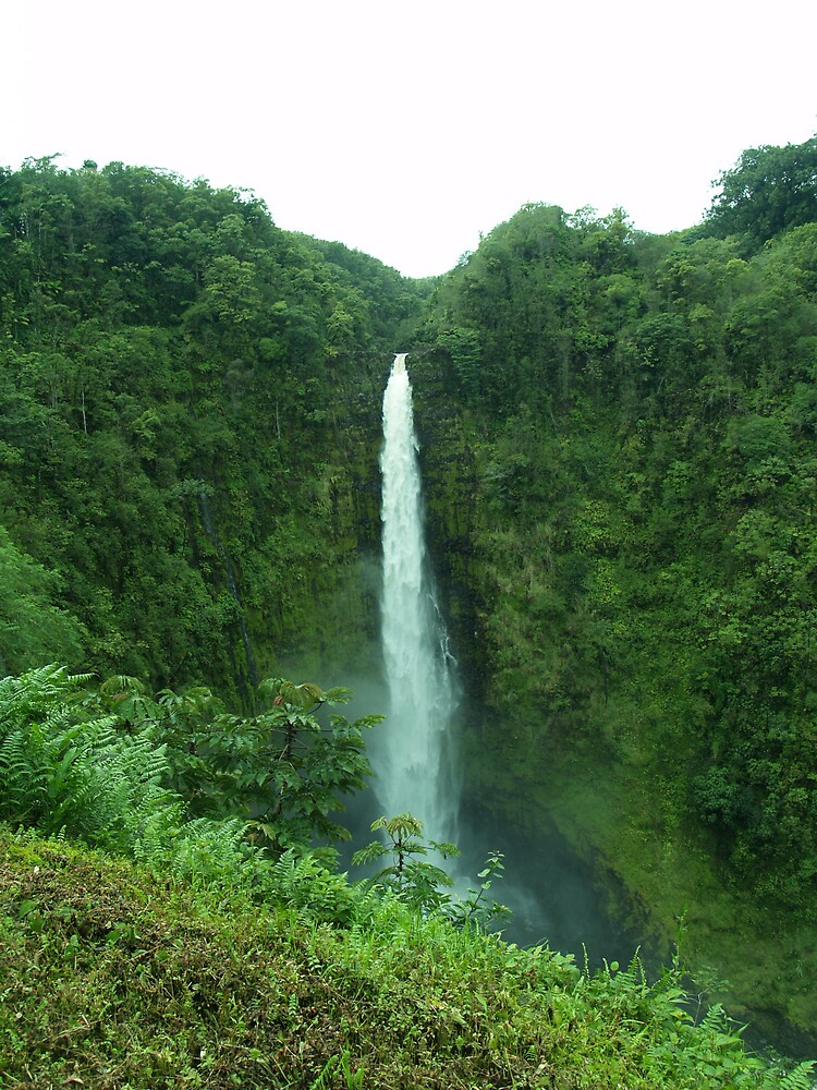 Akaka Falls by Alex Scott