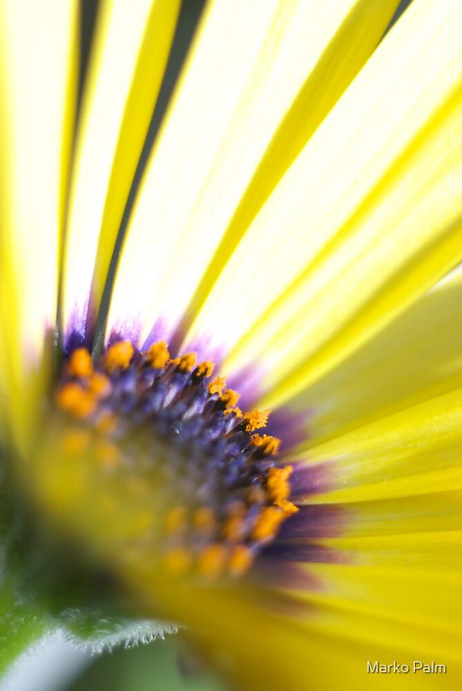 Beautiful Yellow Flower by Marko Palm