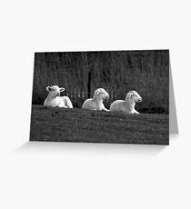 Three lambs Greeting Card