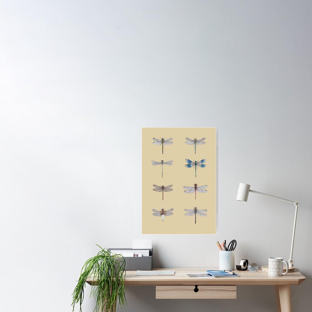 Dragonflies Entomology Studies Poster