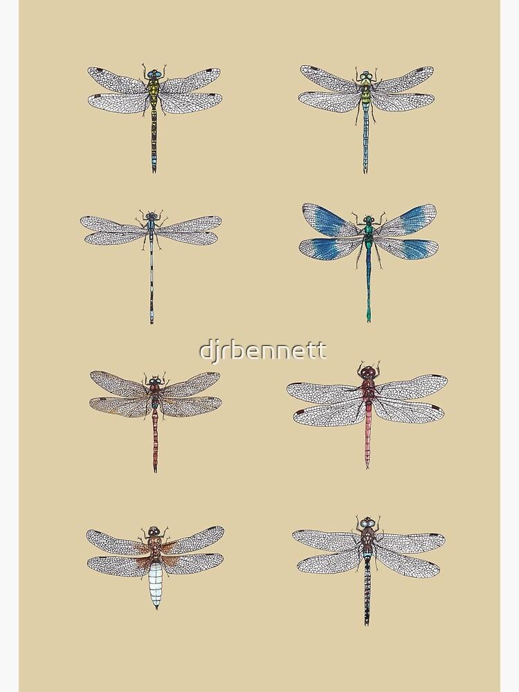 Dragonflies Entomology Studies by djrbennett