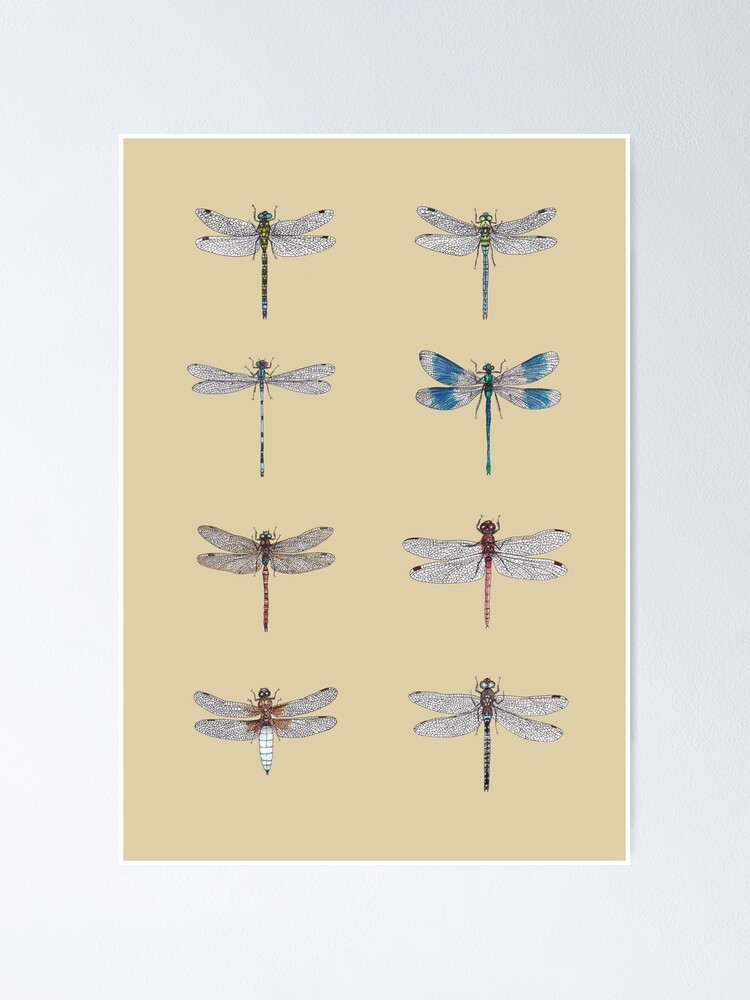 Alternate view of Dragonflies Entomology Studies Poster