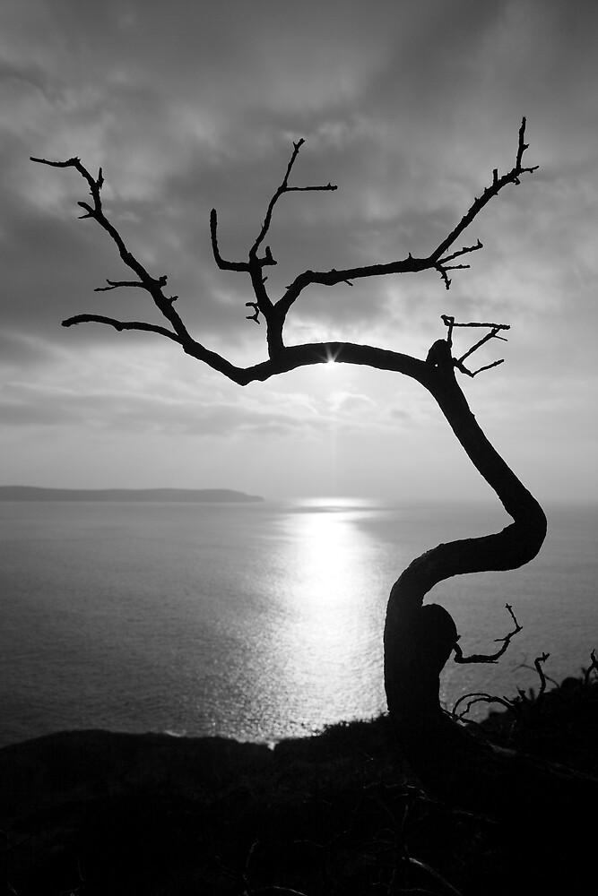 Twisted Bracken by John Burtoft