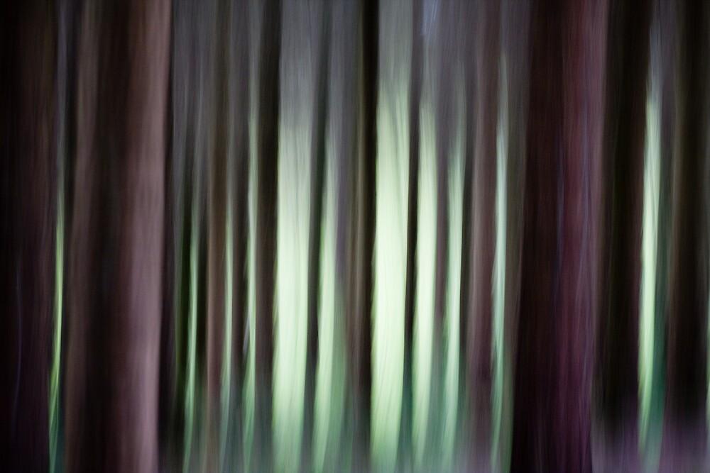 Rosemoor woodlands by John Burtoft