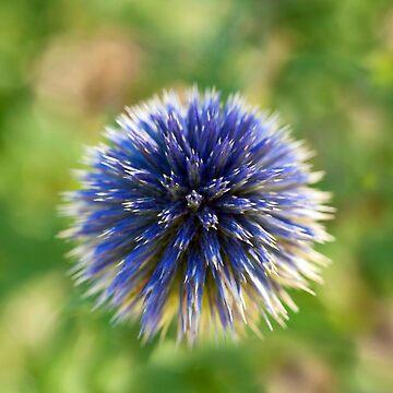 Perfect Little Flower by macduffstudio