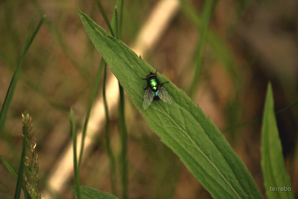 Green Fly by terrebo