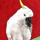 Sulphur Crested Cockatoo by ria gilham