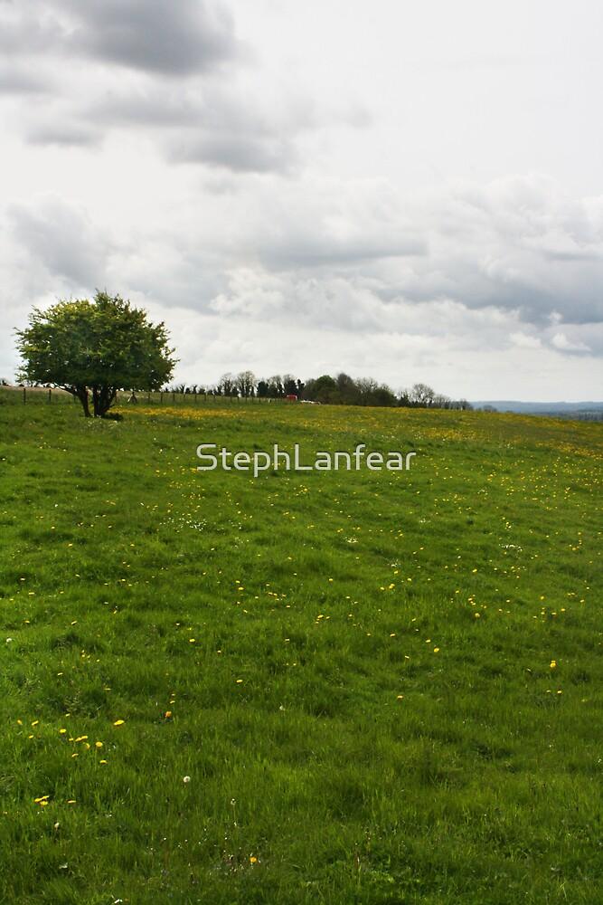 An Open Meadow by StephLanfear