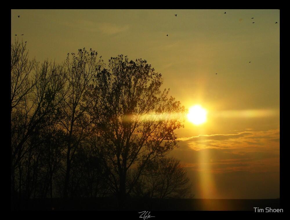 Bright Pine by Tim Shoen