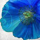 Blue Poppy II by mindydidit
