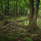 Old Fence in the Woods by David Lamb