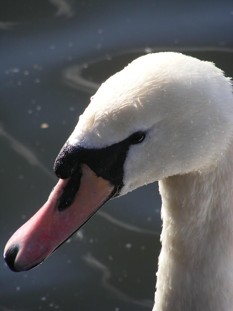 Swan by telle2009