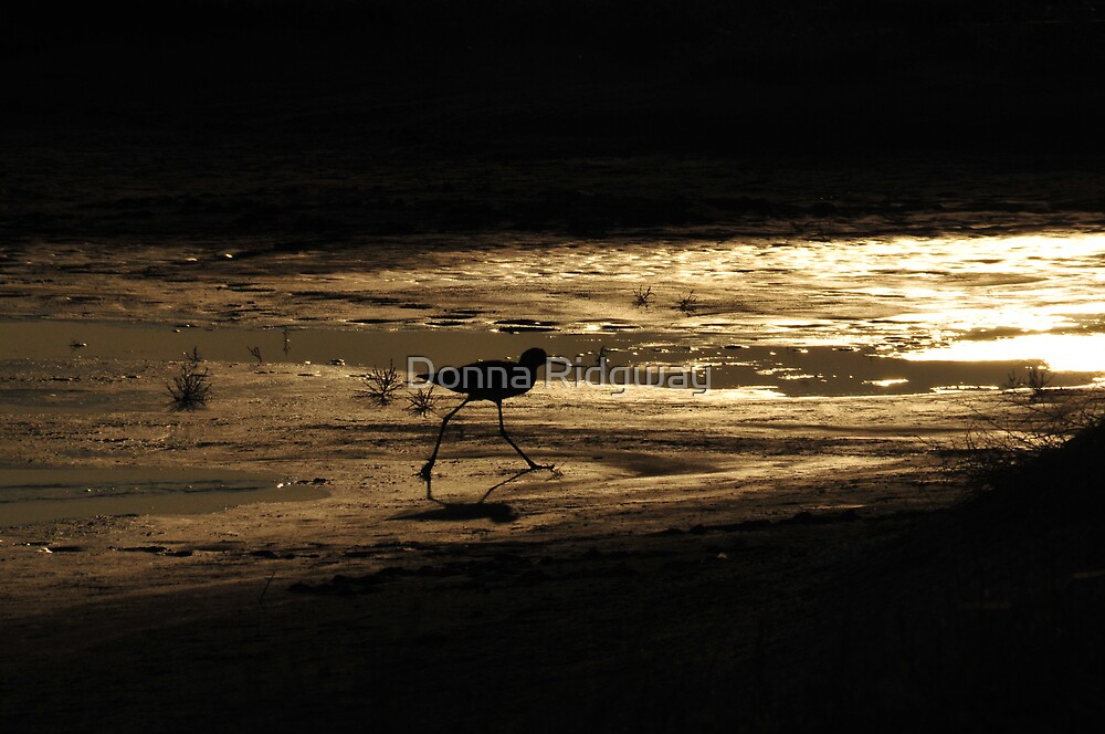 Sunset Avocet by Donna Ridgway
