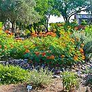 Green Valley Gardeners' Arid Garden by Linda Gregory