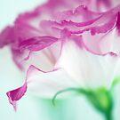 Gently by Renee Hubbard Fine Art Photography