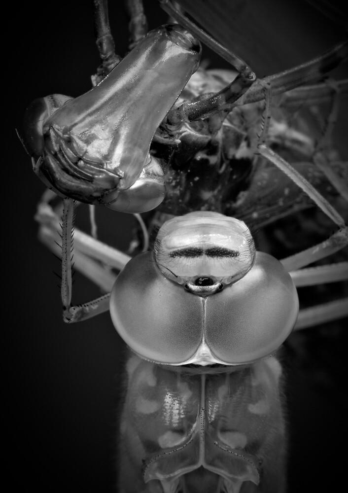 Alien by Hans Van Rafelghem