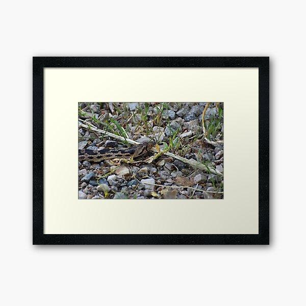 My Nemesis II - Gopher Snake Framed Art Print