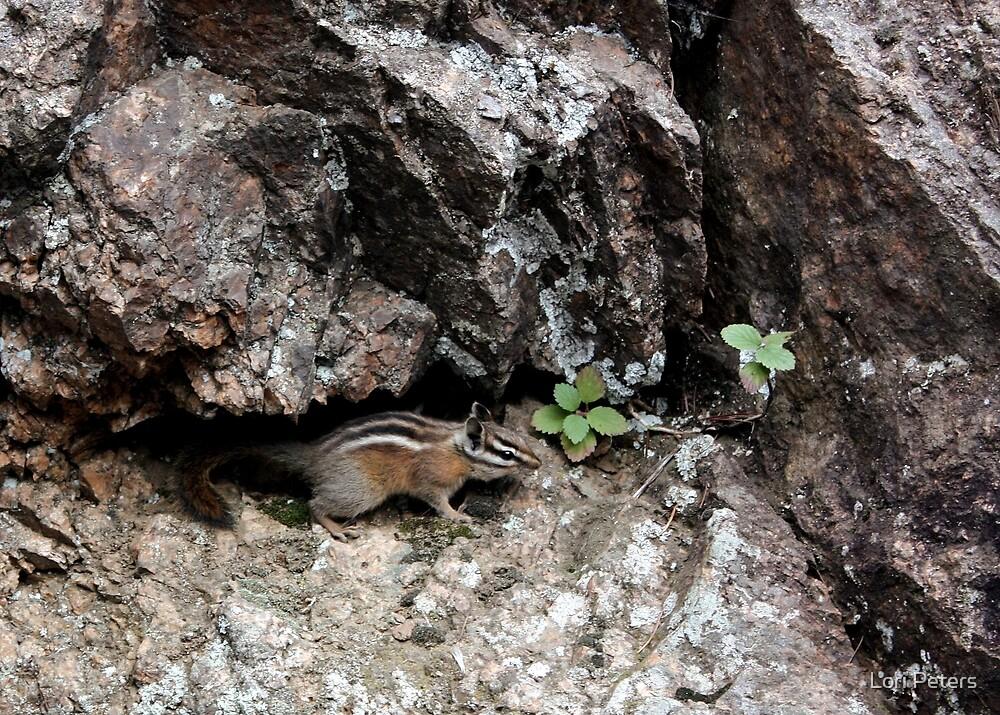 Chipmunk Climbing Seven Falls, Colorado USA
