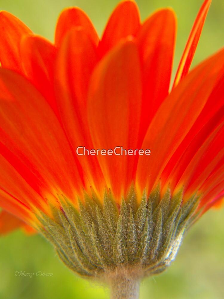 Orange Gerber by ChereeCheree