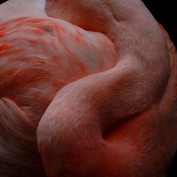 #1368 - Flamingo Slumbers by MyInnereyeMike