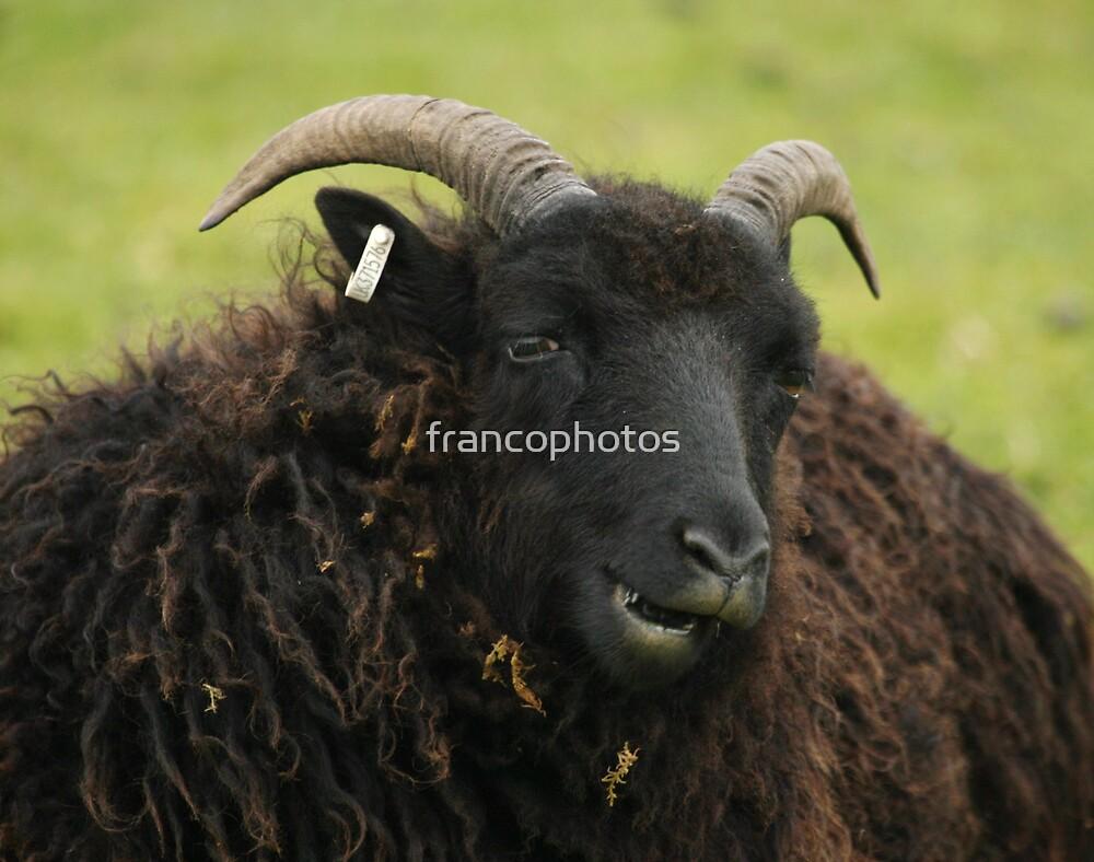 Black Ram by Franco De Luca Calce