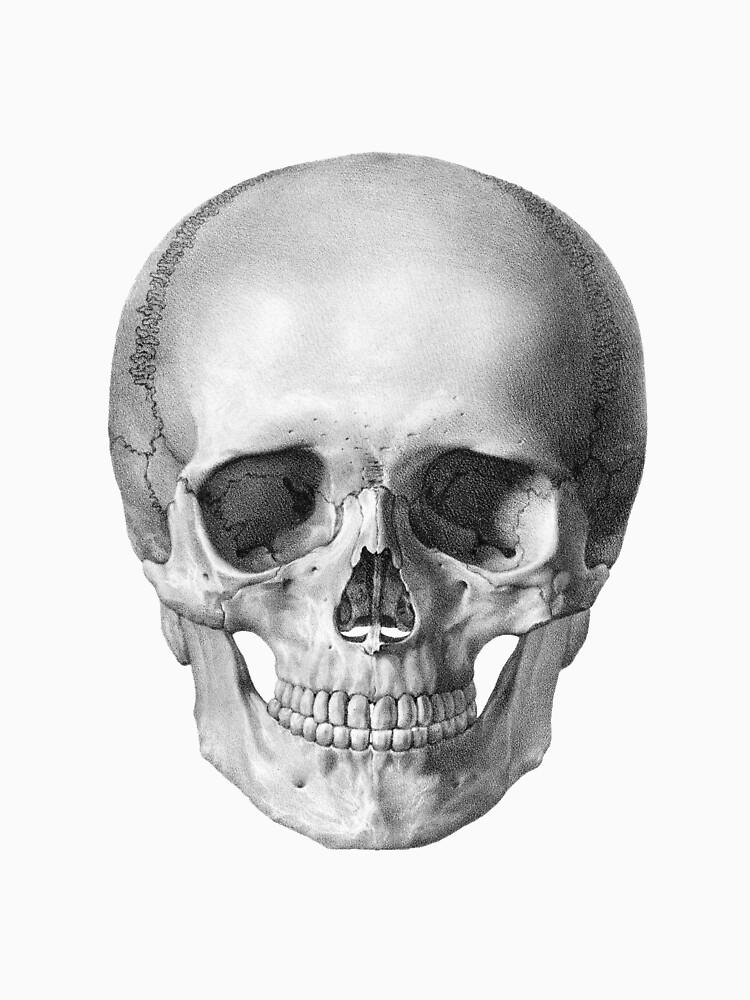 Full Human Skull Front Facing View Vintage Anatomy Womens