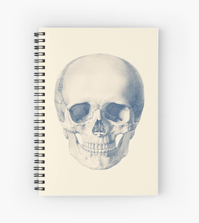 Full Human Skull Front Facing View Vintage Anatomy Spiral
