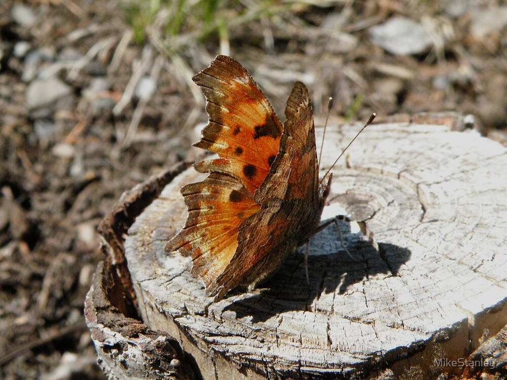 Butterfly on stump by MikeStanley