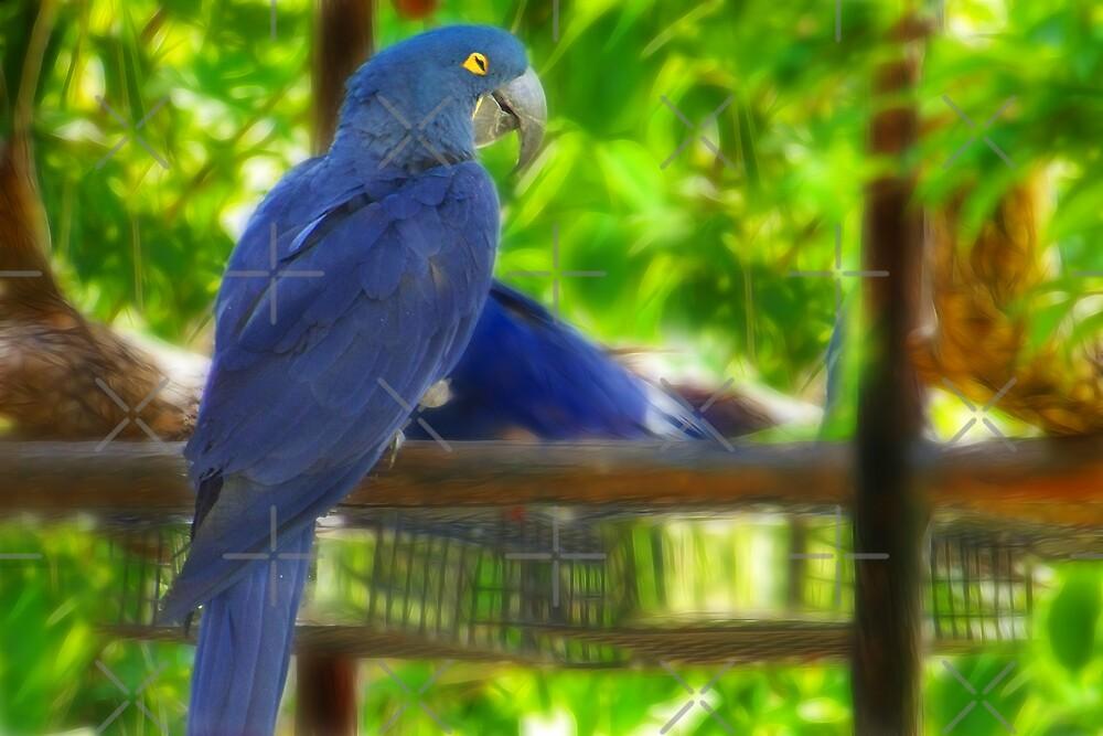 Blue Parrot by Sunflwrconcepts