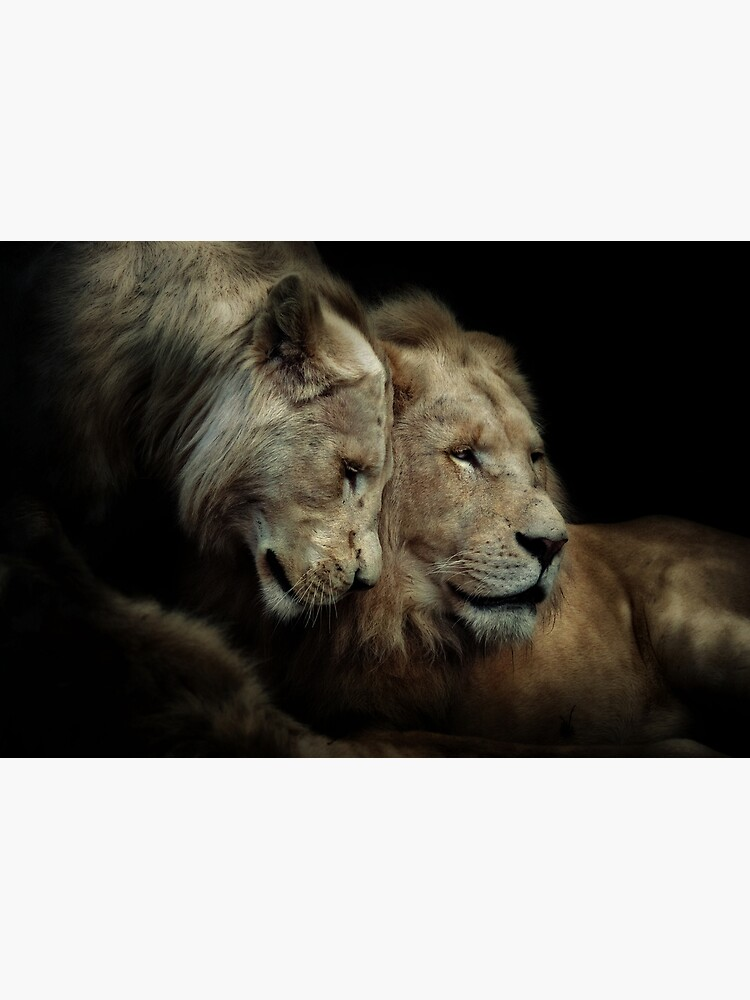 White Lions by Durberville