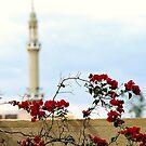 Religious Rose by hady elwy