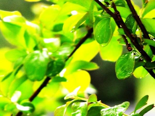 Green Leaves by Ruth Ford