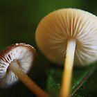 small mushrooms by Antanas