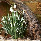 First Signs of Spring by Andy Freer