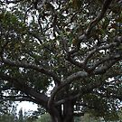 The Faraway Tree by Graham Mewburn