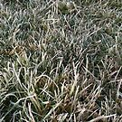 Frosty grass by Ruth Varenica