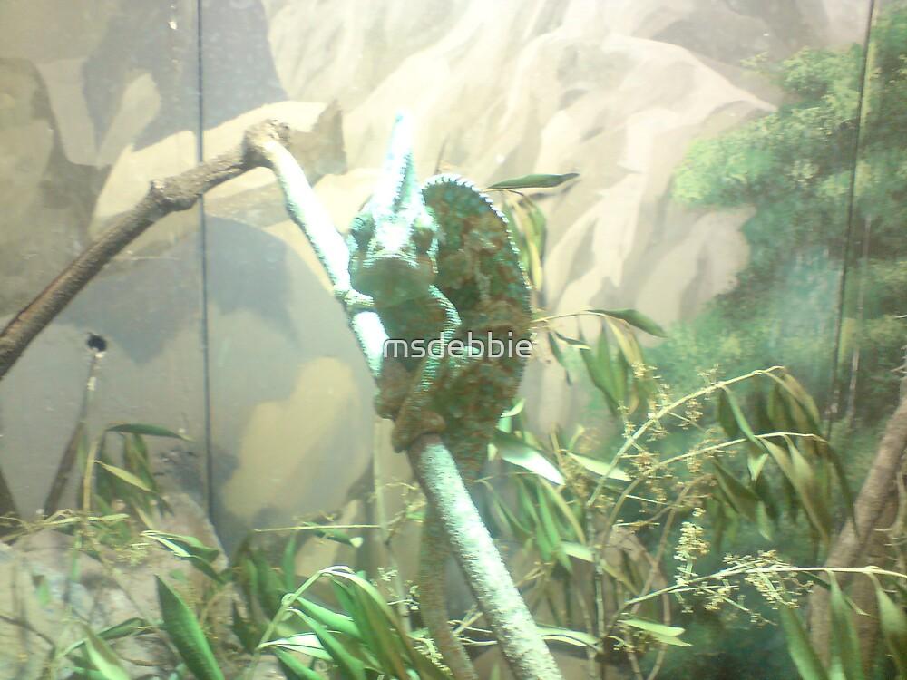 Iguana by msdebbie