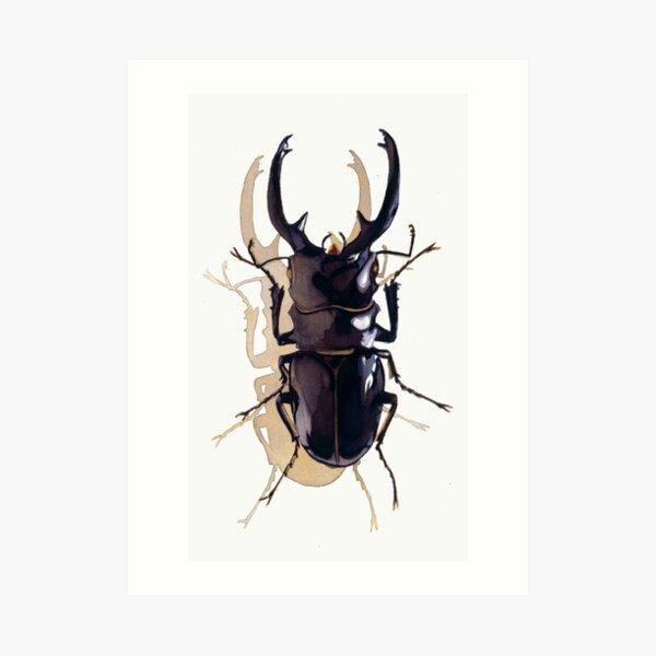 """Odontolabis d. subita"" Stag Beetle Watercolor Art Print"