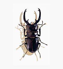 """Odontolabis d. subita"" Stag Beetle Watercolor Photographic Print"