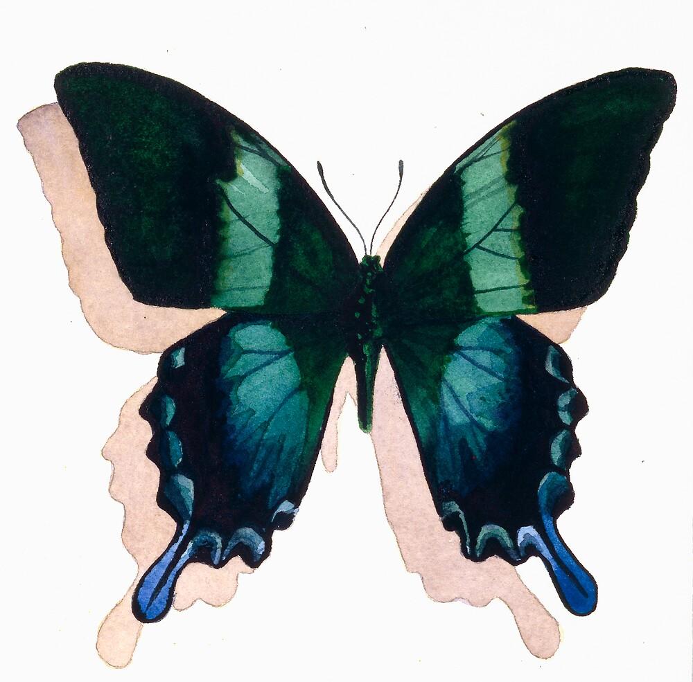 """Papilio blumei"" Watercolor by Paul Jackson"