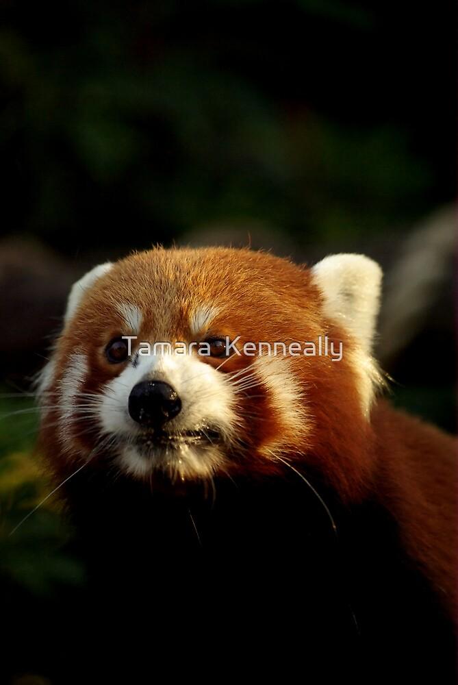 Red Panda by Tamara  Kenneally