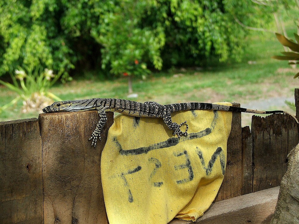 Lizard number 1 by RJ-Mac
