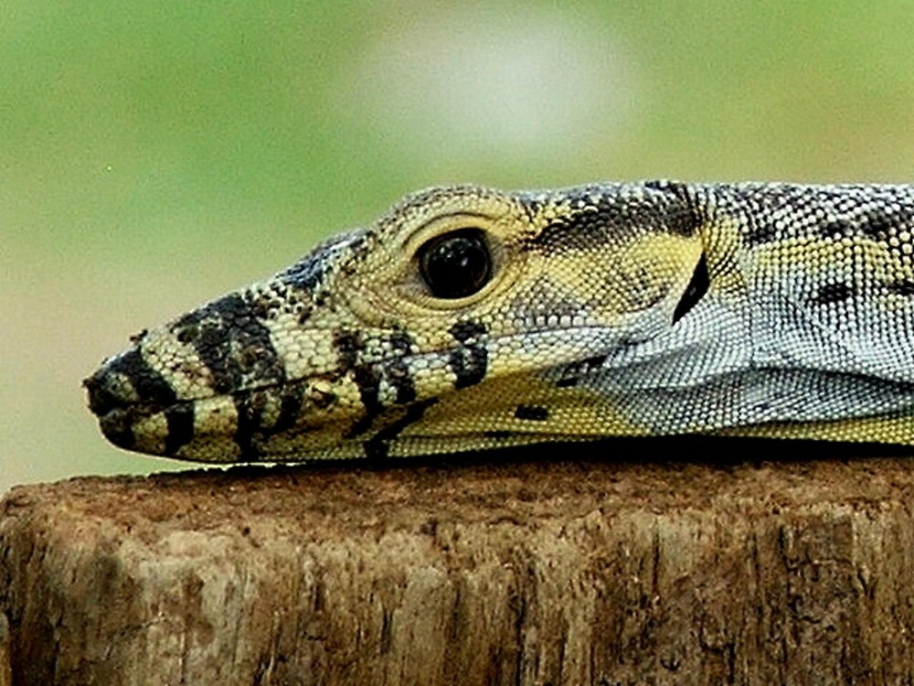 Lizard in my tree house by RJ-Mac