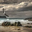 Fingal Seascape by carol brandt